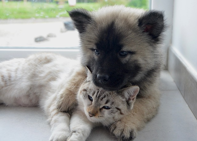 dog-cat-2904616_640.jpg