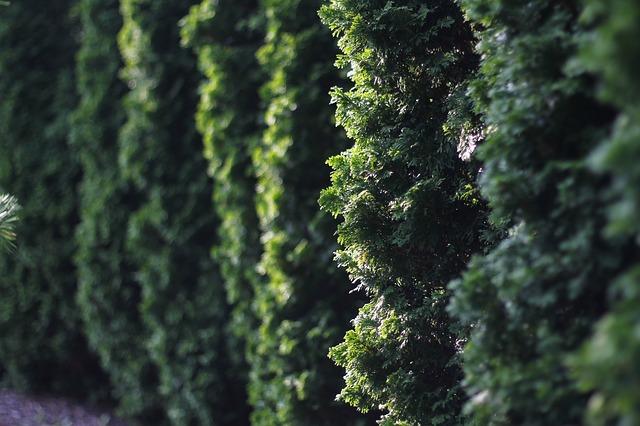 hedge-2706108_640.jpg