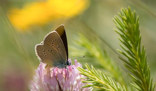butterfly-1976737_640.jpg